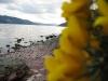 lagoness013.jpg