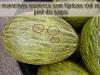 melon_piel_sapo005.jpg